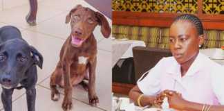 Akothee's dogs